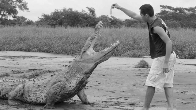 Crocodile, Feeding, Feeding time, Feed the beast
