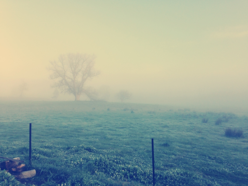 Nashville; Photography; Landscape; Rural; Country; Countryside; Dawn; Morning; Mist