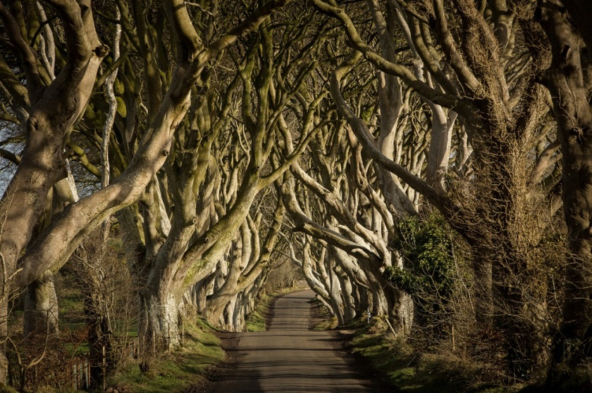 Game of Thrones; King's Road; Northern Ireland; Ireland; Forest; Road; Analogy; Movie; Film; Television