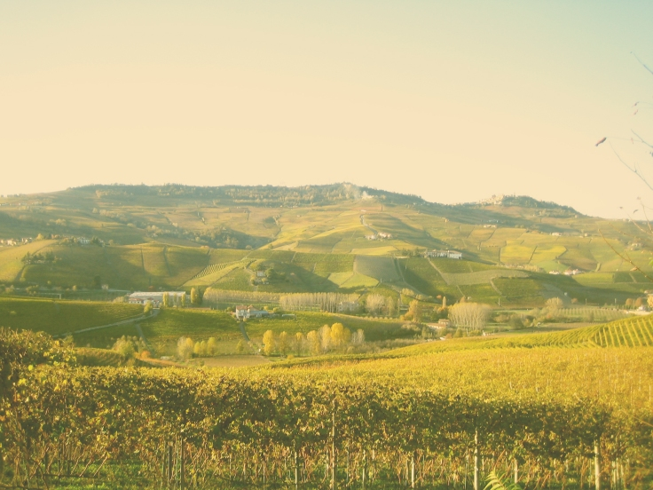 Italy; Piemonte; vineyard; winery; wine; travel